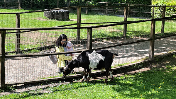A Visit to Maplewood Farm with a Baby Infant - Indulge with Bibi