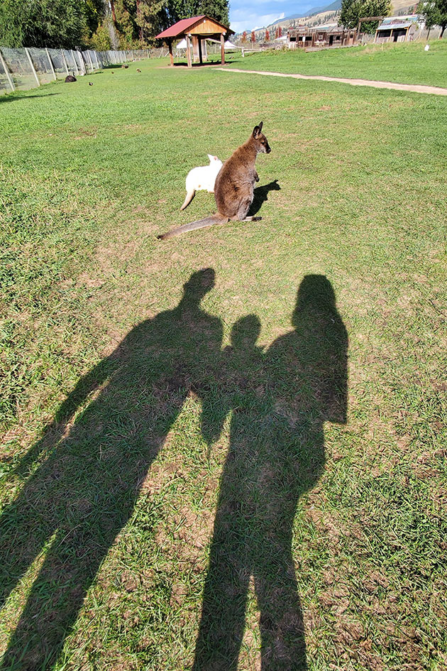 Shadow of parents with baby in the grass.